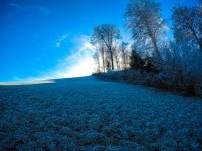 Fields of Frozen Grass